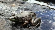 sécheresse : restrictions d'eau en Haute Garonne
