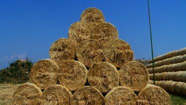 Le Foll annonce son plan de soutien à l'élevage français mercredi matin