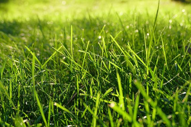 pelouse du stadium municipal de Toulouse pose problème. Cette pelouse ...