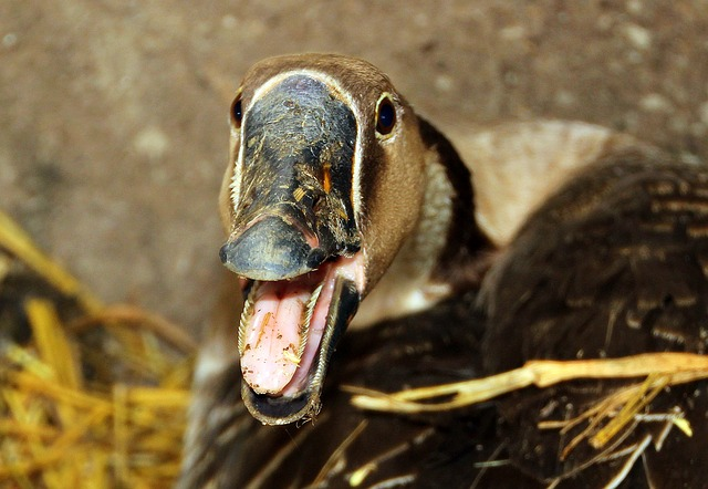 grippe aviaire aides sud ouest