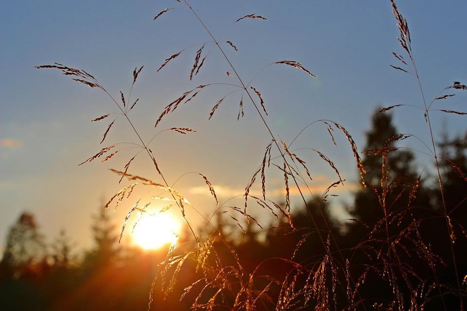 Météo Toulouse. grand soleil et 28 degrés mardi après midi