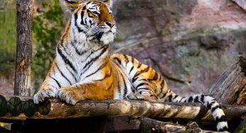 Tarn. la ville de Rabastens interdit les cirques avec animaux captifs sur sa commune