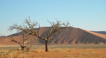 Alerte à la sécheresse et à la faim en Ethiopie