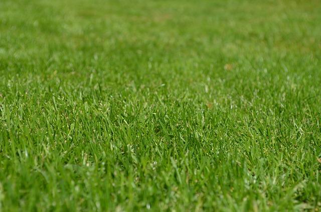 La pelouse sera jouable — TFC-OM