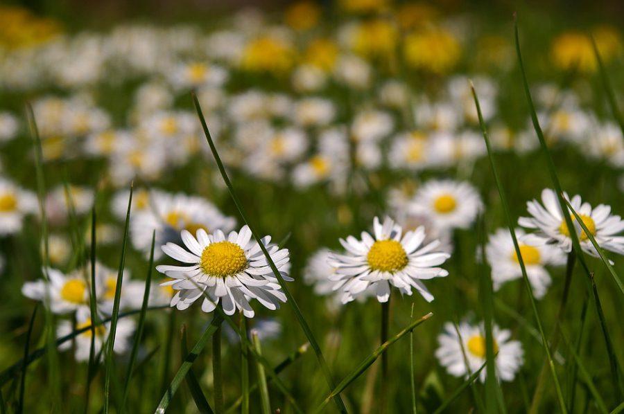 1er jour du printemps 2017 et bilan d 39 un hiver sans neige toulouse - Taille du pecher au printemps ...