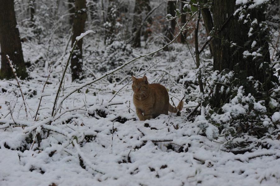 11 départements du Sud placés en alerte orange — Vents et neige