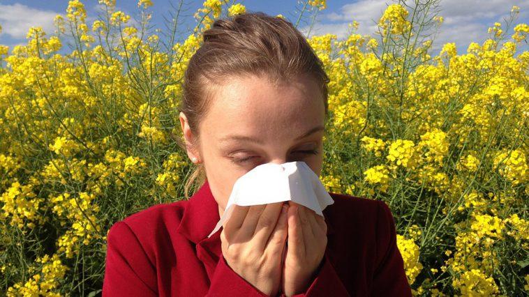 Allergies. Alerte aux pollens de graminées en Occitanie