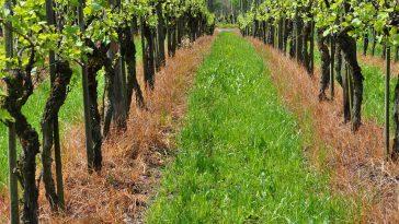 Vin d'Espagne vendu avec la mention Vin de France. Comment les enquêtes sont menées en Occitanie