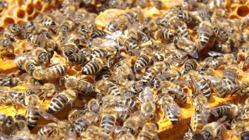 Intrerdiction des pesticides. retour en arrière annoncé du gouvernement Philippe