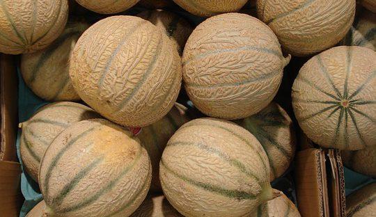 Un camion de melons se couche sur la rocade de Toulouse et provoque des bouchons