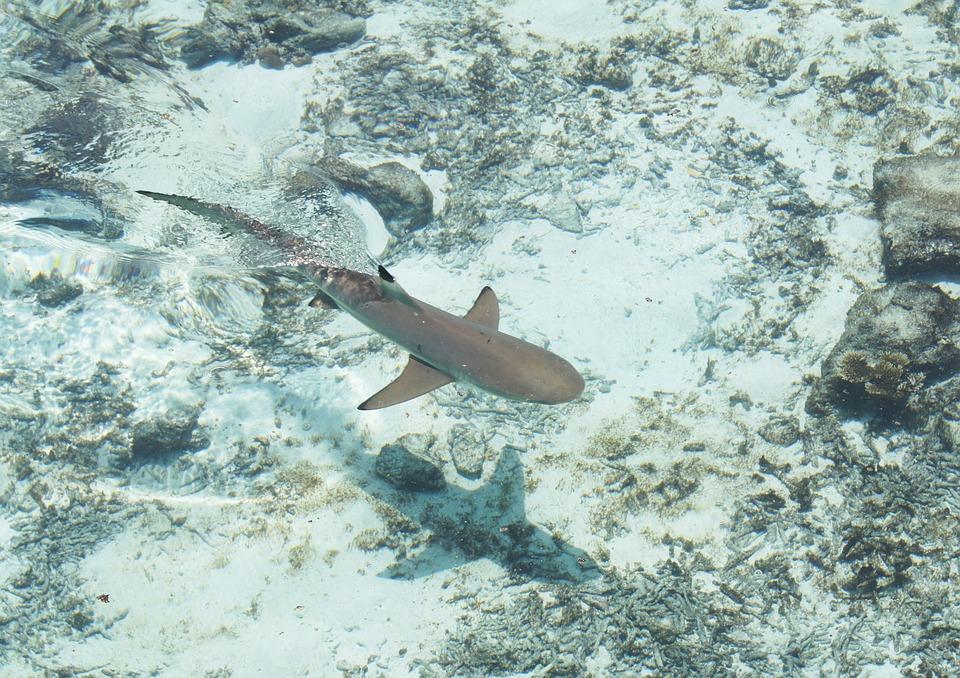 Australie : 400 requins encerclent un groupe d'enfants, les images terrifiantes (vidéo)