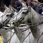 L'ouverture Officielle du festival Equestria au public se déroulera mardi 25 juillet à partir de 18h. Pour l'occasion, l'accès au festival sera gratuit ce jour-là : A 18h30, sur la Prairie de Concours, une présentation de tous les artistes, cavaliers et chevaux présents pour le festival sera faite en présence du mairie de Tarbes et de la fanfare du 1er RHP, A 19h30, au cabaret équestre sera proposé un défilé de mode équestre et de lingerie féminine réalisé par les partenaires Equestria Tarbes 2017 partenaires Décathlon et Allande.
