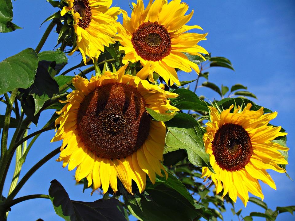 Météo Toulouse. soleil et 31 degrés dimanche après midi