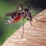 Moustiques Tigres. la mairie de Toulouse appelle à vider soucoupes, vases et seaux