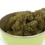 Ariège. une centaine de pieds de cannabis saisis à proximité de Massat