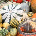 automne c'est aujourd'hui et jusqu'au 20 décembre