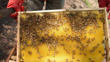 à Foix, ils œuvrent pour le développement d'une apiculture durable en Ariège