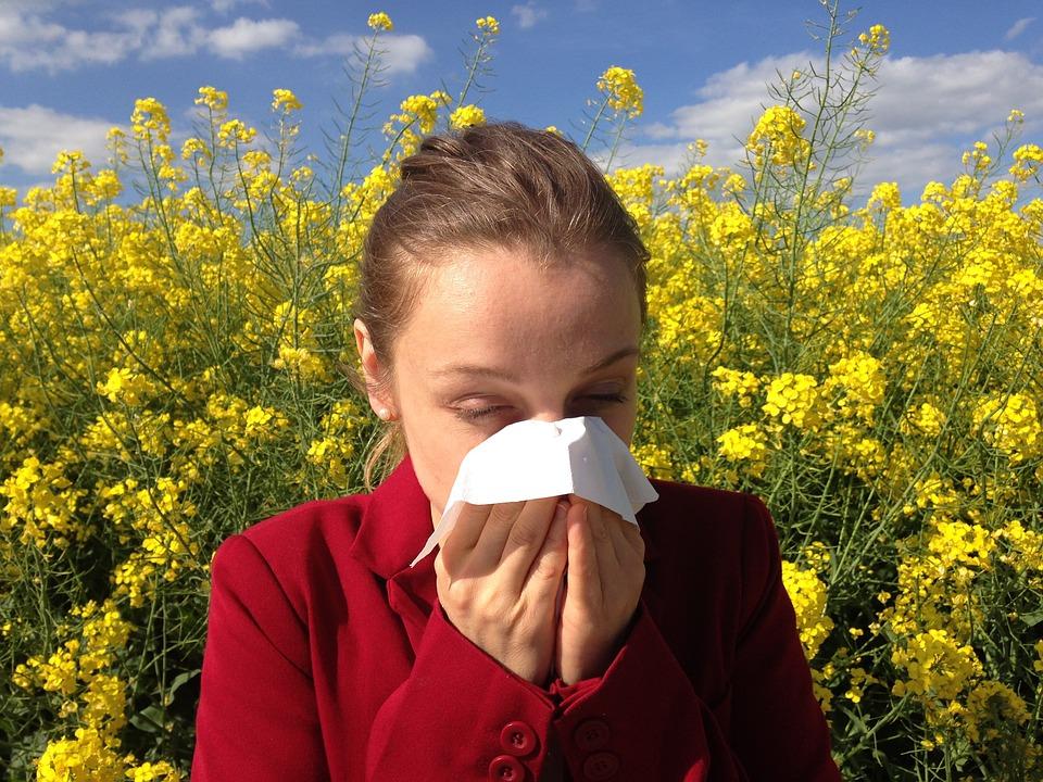 Alerte aux pollens de chênes et de graminées en Haute Garonne