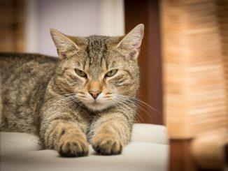 Avec l'arrivée des fortes chaleurs, attention aux chutes de chats