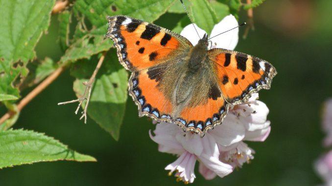 Biodiversité un espèce sur trois est menacée de disparition en France