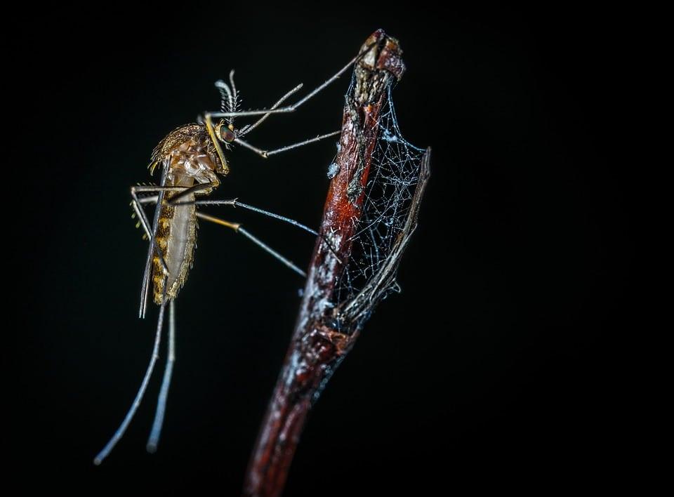 Comment Toulouse veut lutter contre le moustique Tigre
