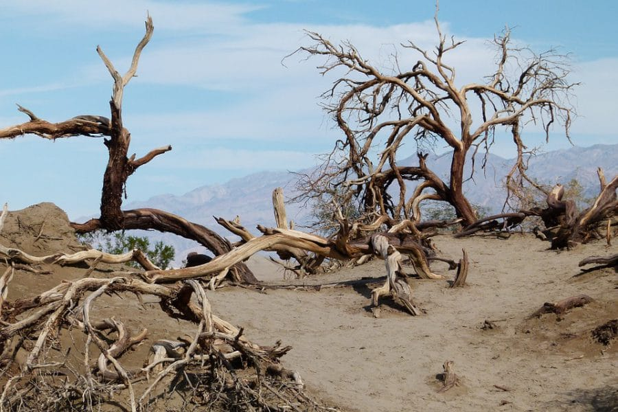 Sahel. Alerte humanitaire