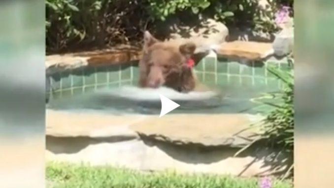 États-Unis Un ours profite du jacuzzi d'un Californien Vidéo