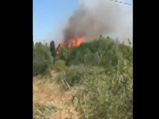 Incendie dans un quartier résidentiel de Narbonne
