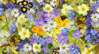 Fête des Fleurs à Luchon. les chars fleuris défilent