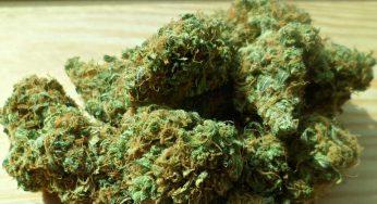 Cocaïne et Cannabis saisies à Toulouse Bellefontaine, 6 personnes en garde à vue