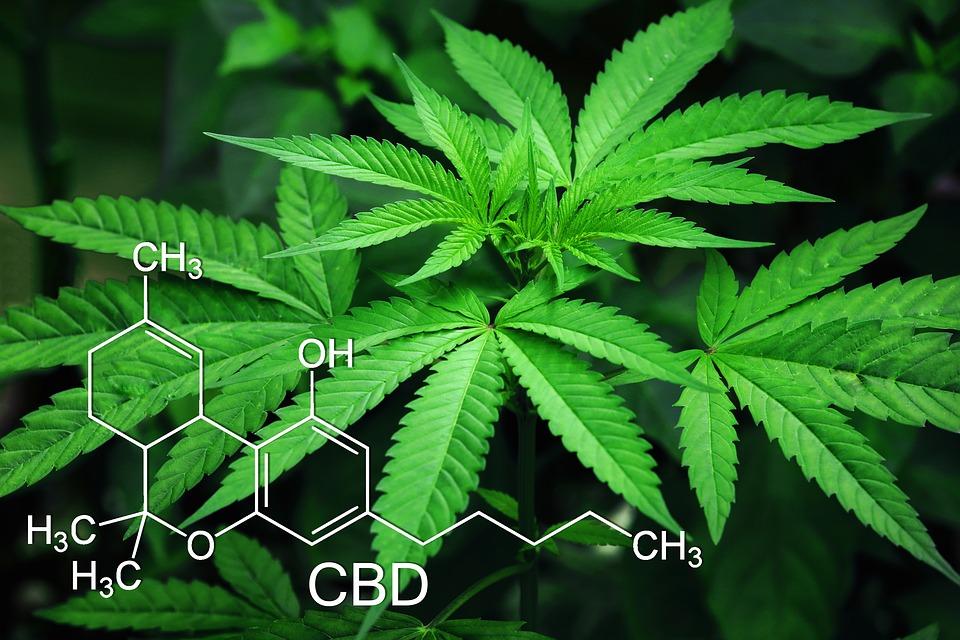 Le cannabis affole la Bourse de New York
