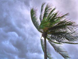 Typhon Jebi, des vents de 209 km h mesurés au Japon