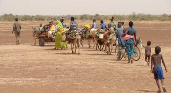 Au moins 80 000 enfants expulsés d'Angola vers la République Démocratique du Congo