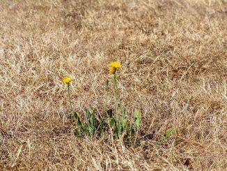 La sécheresse en ce début de mois d'octobre en Haute Garonne