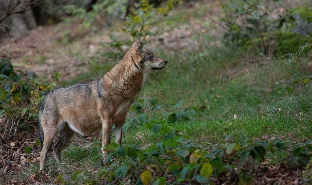 Le point sur la biodiversité en Occitanie