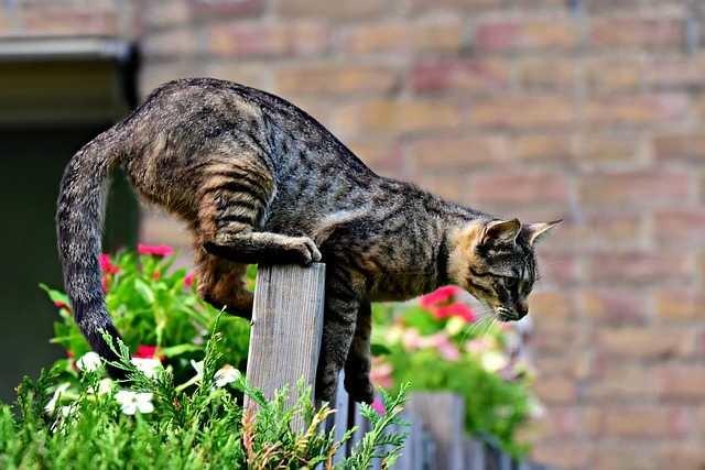 Qui attaque les chats de Toulouse avec des armes à feu ?