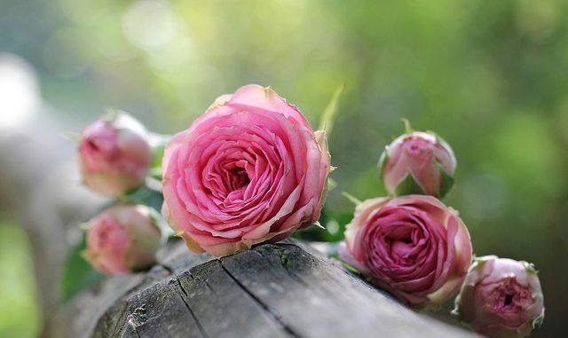 Reynerie en rose le 14 octobre