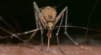 Présent dans le sud de la France, ce virus du Nil qui inquiète