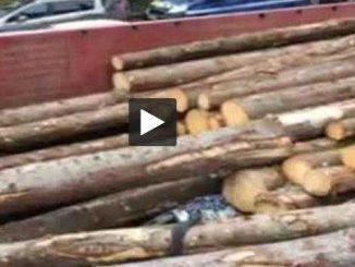 Des troncs d'arbres se renversent sur un véhicule à Gages
