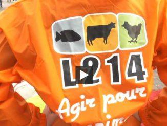Foie Gras Toulouse L'association L214 lutte contre le gavage des animaux