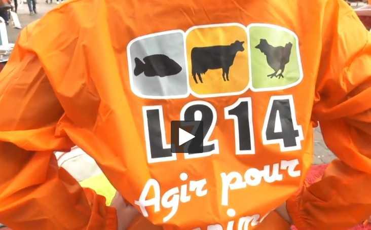 Foie Gras Toulouse : L'association L214 lutte contre le gavage des animaux
