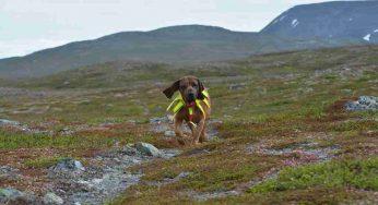 Un chien du Gers prix du héros de l'année