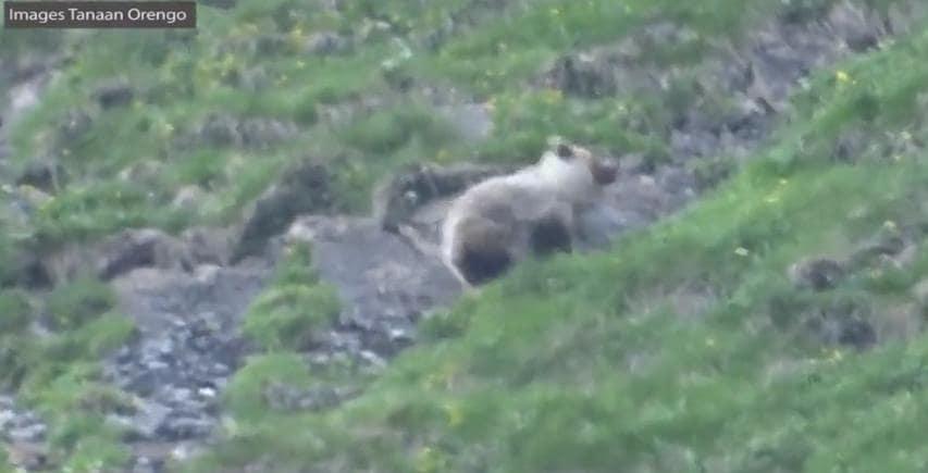 à 9 ans, il filme un ours en Ariège-min
