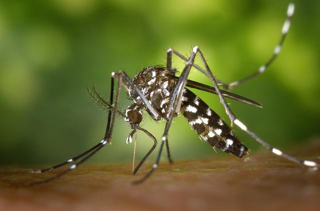 Colomiers, Saint Jean, Saint Gaudens, 3 réunions pour lutter contre le moustique tigre
