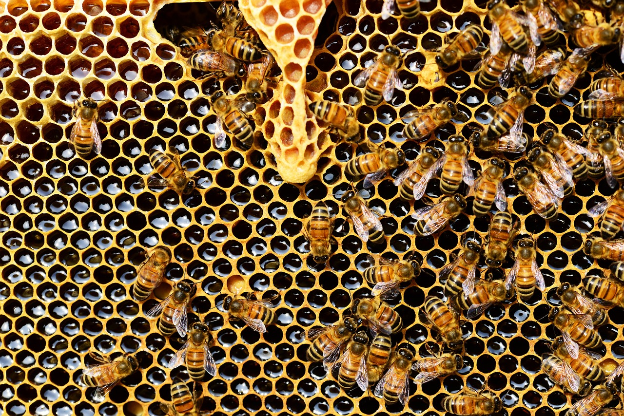 Foire au miel à Toulouse