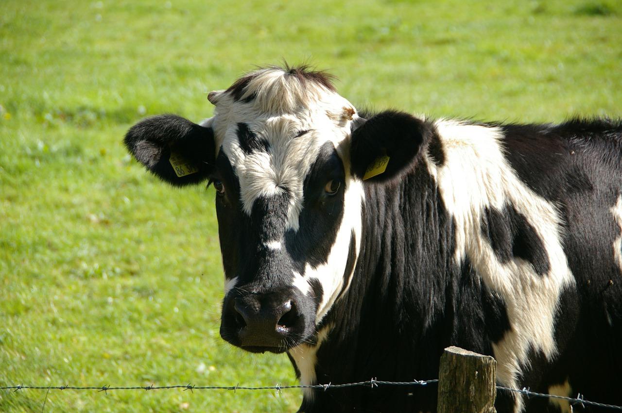 Lubrizol. Levée des mesures de restriction sur le lait et les produits laitiers