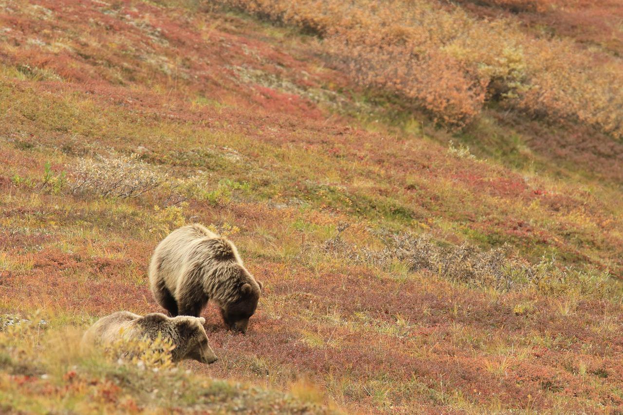 Tarbes, les agriculteurs anti ours en colère