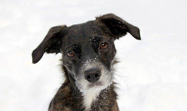 Toulouse. adopter un chien à la SPA possible dès jeudi