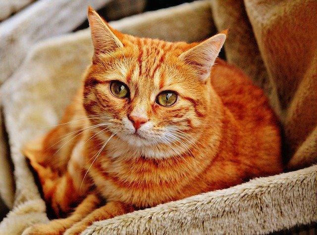 Des Vétérinaires Toulousains découvrent un chat malade du Coronavirus