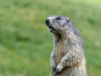 Le Parc National des Pyrénées demande aux randonneurs de faire attention aux animaux sauvages
